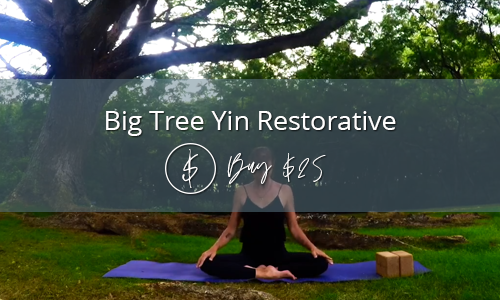 Big Tree Yin Restorative Yoga with Katie Trussell